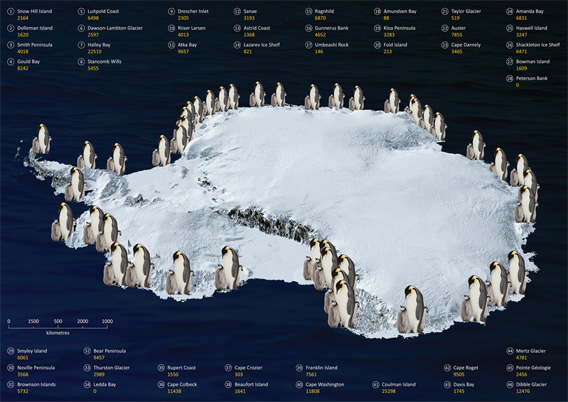 Emperor penguin populations in Antarctica