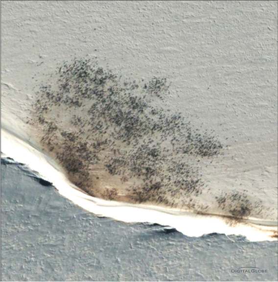 Aerial photograph of an emperor penguin colony