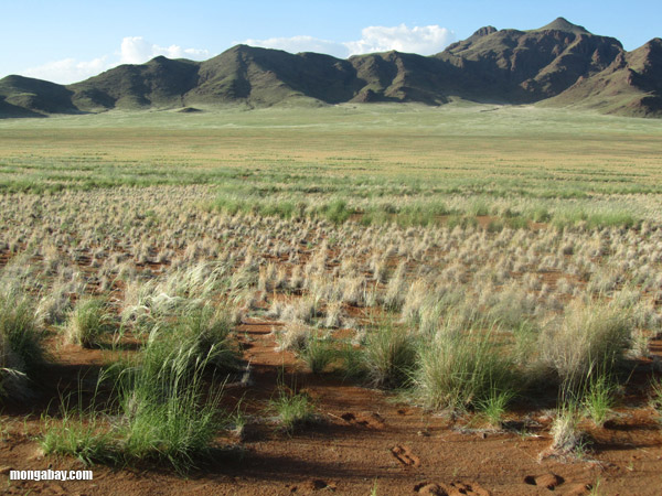 mountains and grasslands in the namib desert