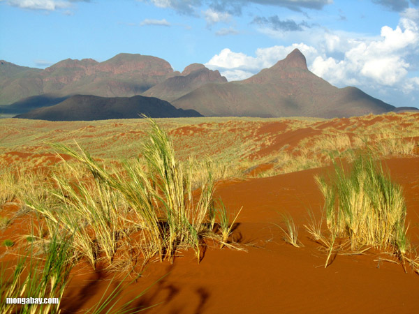Namib-Naukluft National Park, Namibia. Photo by: Rhett A. Butler.