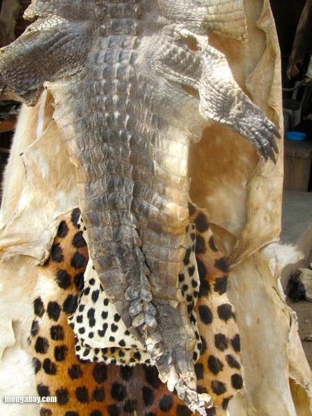 crocodile skin and leopard skin at wildlife products