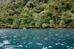 Turquoise ocean and rainforest of Isla Gorgona