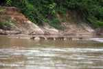Capybaras in a river [colombia_3423]