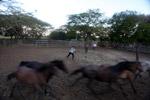Colombian cowboys wrangling wild horses