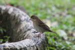 Bird [colombia_4096]