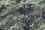 Birds [colombia_4143]