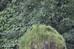 Bird [colombia_4240]
