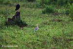 Heron [colombia_4804]