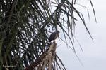 Raptor [colombia_4823]