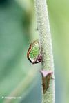 True bug [colombia_4860]