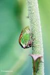 True bug [colombia_4862]