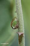 True bug [colombia_4870]