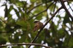 Bird [colombia_5153]