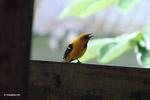 Bird [colombia_5226]