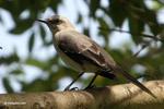 Bird [colombia_5309]