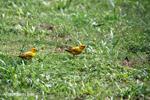 Birds [colombia_5316]