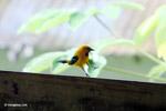 Bird [colombia_5325]