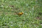 Bird [colombia_5383]