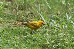 Bird [colombia_5438]