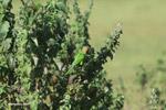 Parrots [colombia_5767]