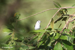 Bird [colombia_5893]