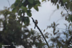 Bird [colombia_6007]