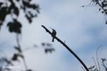Bird [colombia_6069]