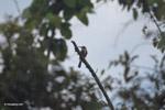 Bird [colombia_6077]