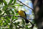 Bird [colombia_6250]