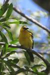 Bird [colombia_6257]