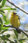 Bird [colombia_6258]