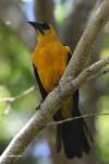 Bird [colombia_6262]