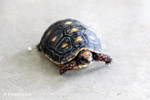 Tortoise [colombia_6502]