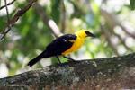 Bird [colombia_6517]
