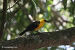 Bird [colombia_6518]