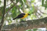 Bird [colombia_6526]