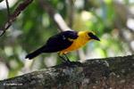 Bird [colombia_6527]