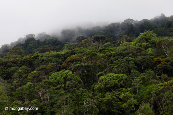 Rain forest of Isla Gorgona off Colombia. Photo by: Rhett A. Butler.