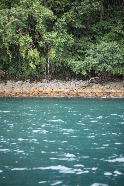 Turquoise sea and rain forest of Isla Gorgona