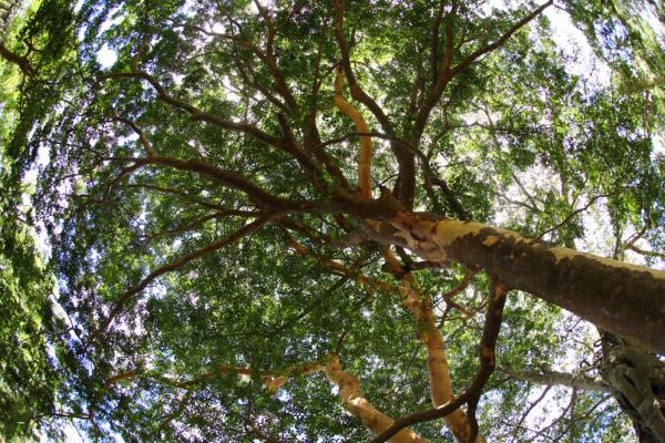 Tree in Colombia. Photo by: Rhett A. Butler.