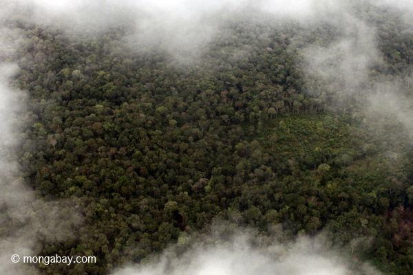 Swamp forest in Western Colombia. Photo by: Rhett A. Butler.