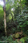 Rainforest near Jantho