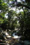 Rainforest creek near Jantho [aceh_0299]
