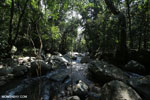 Rainforest creek near Jantho [aceh_0308]