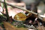 Mating butterflies [aceh_0423]