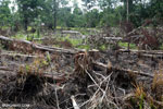 Smallholder clearing in Central Kalimantan. Photo taken in March 2013 by Rhett A. Butler