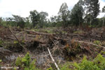 Slash-and-burn agriculture in Borneo [kalteng_0136]