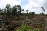 Slash-and-burn agriculture in Borneo [kalteng_0141]