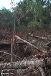 Slash-and-burn agriculture in Borneo [kalteng_0158]
