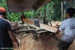Illegal logging operation in Borneo [kalteng_0218]